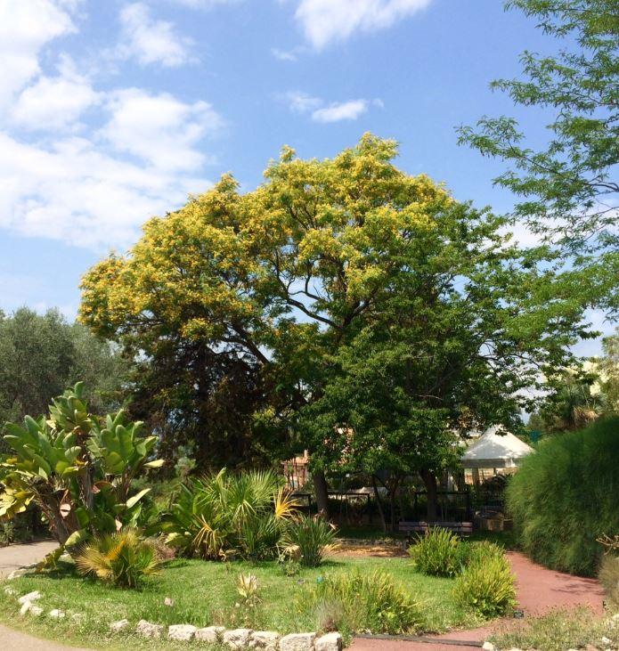 Sudoc ps la biblioth que du jardin botanique de nice for Jardin botanique nice